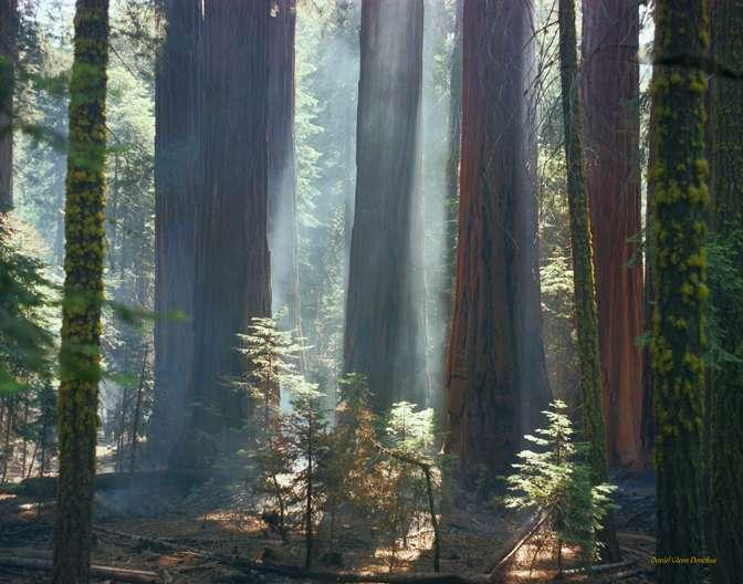 redwoodfire.jpg