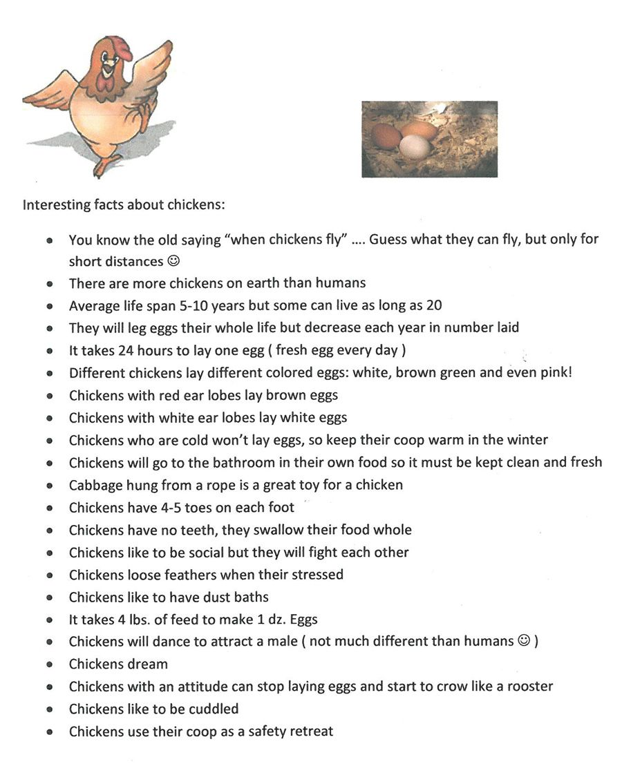 Brook Park Chickens: Fun Facts About Chickens